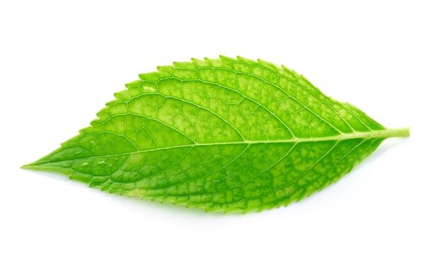 白い壁に緑の葉