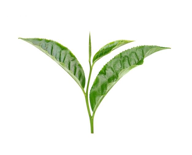 白い壁に茶葉