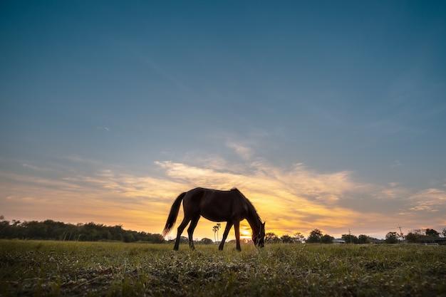 夕暮れ時に牧草地に放牧馬のシルエット。