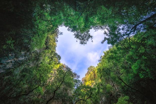 ハート形の熱帯雨林の空の写真。自然の背景。