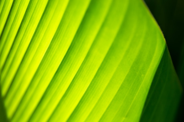 Зеленый лист текстуры фона с солнечным светом