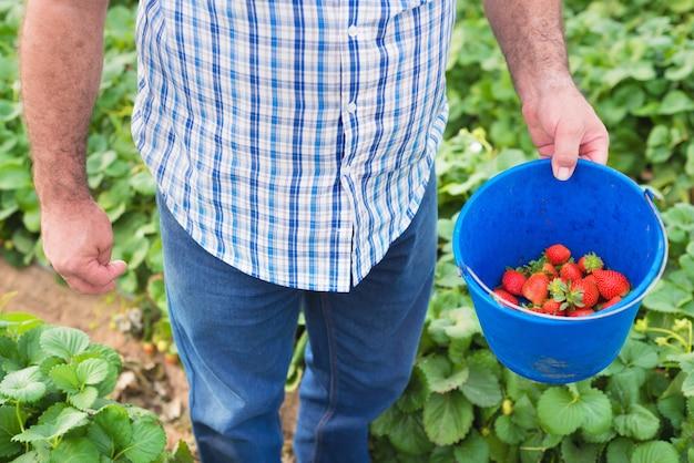 農夫のイチゴのバケツ