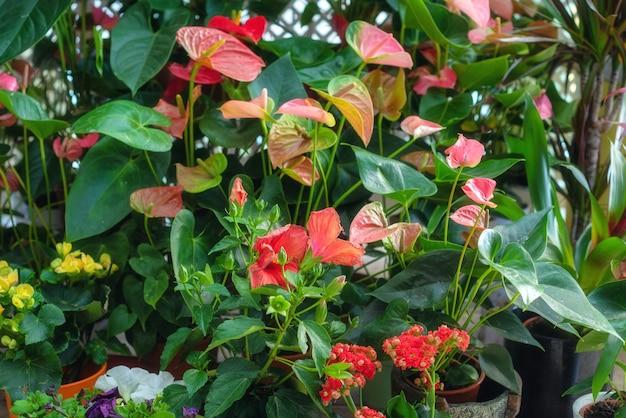 フラワーショップのカラフルな混合花と植物。