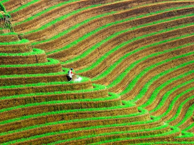 Плантация лукового поля
