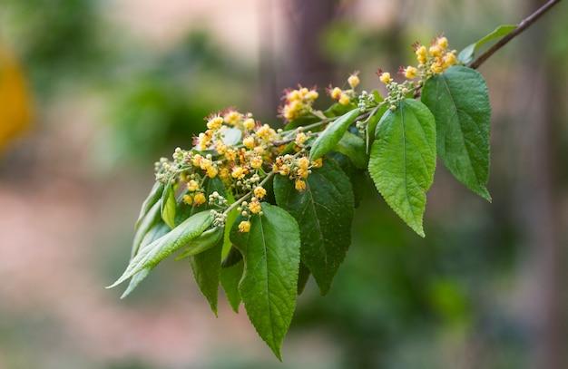 花と緑の葉