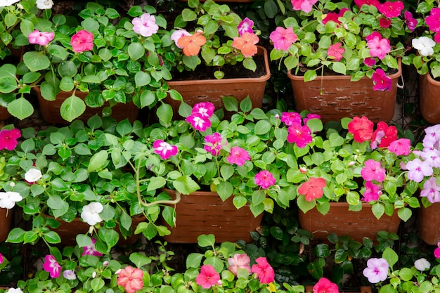 Красивый забор или отделка стен фоном красочные цветы петунии в горшке