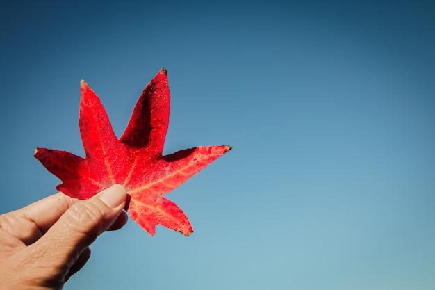 セレクティブフォーカスの空と日光を背景にカラフルな赤いカエデの葉を手に歓迎秋の背景