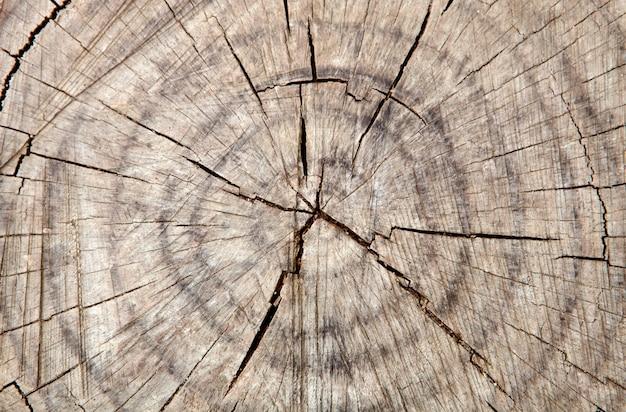 古い木の割れた幹