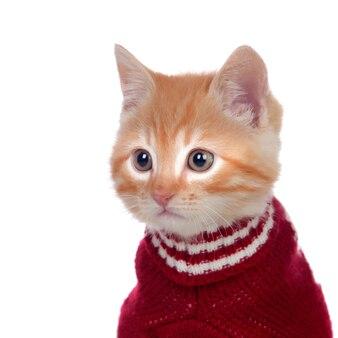 Красивый рыжеволосый котенок с шерстяным свитером