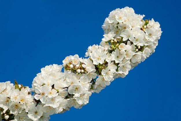 青い空に繊細な桜の枝