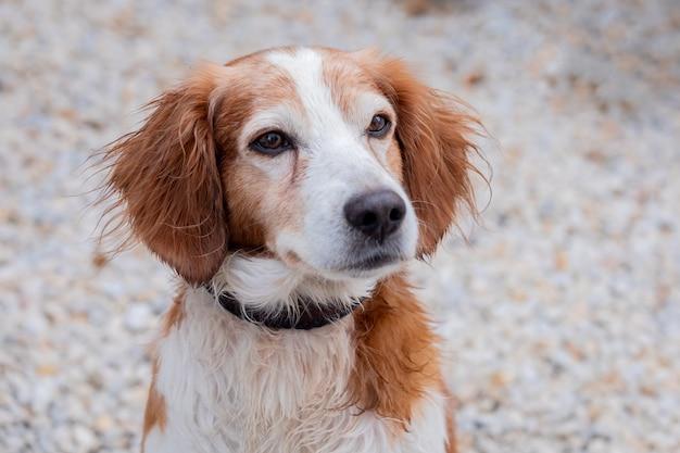 外の白と茶色の犬の肖像画
