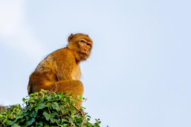 小さな猿の肖像画