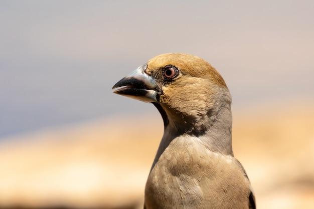 茶色の鳥の美しい肖像画