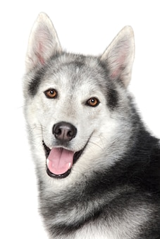 Очаровательная собака на белом фоне