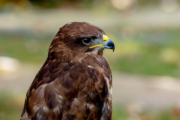 Портрет хищной птицы