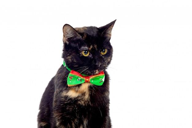 Красивый черно-коричневый кот в галстуке-бабочке