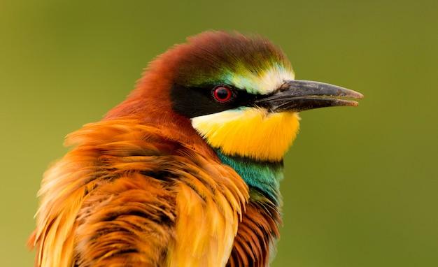 Портрет красочной птицы