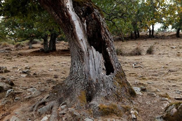 幹の穴があるフィールドの木
