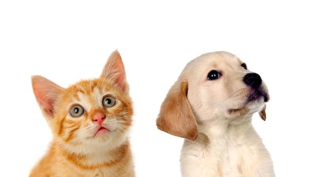 Два красивых щенка, кошка и собака,