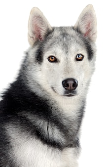 愛らしい犬の上に白い背中の地面