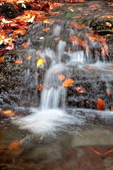 秋の葉を持つ川のカスケード水