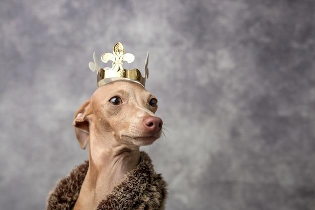 面白い犬は、ウィザードの王様として服を着た。クリスマス