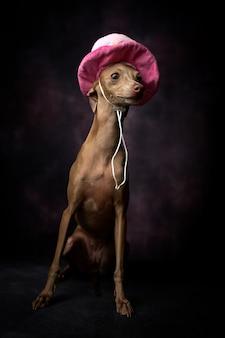 幸せな誕生日の帽子をかぶった小さなグレイハウンド犬の肖像画