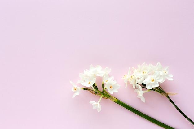 Свежие цветы на цветном фоне сверху