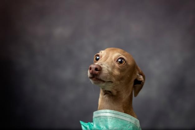 コロナウイルス保護マスクを持つ犬