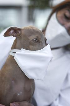 Собака на улице с защитной маской для коронавируса