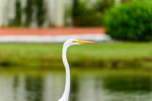 湖の近くの草の中のヘロン