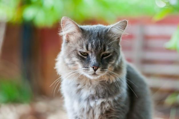 グレーの猫を探して