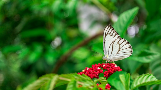 庭の花を食べて蝶の昆虫の写真を閉じる
