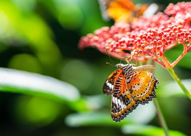 赤い花の蜜を飲むカラフルな蝶