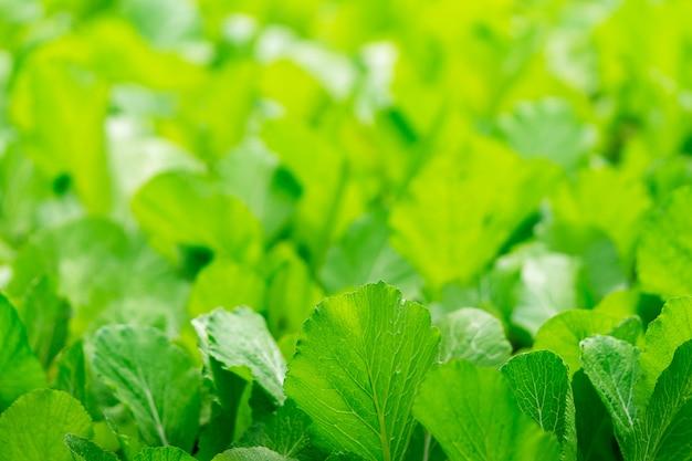 抽象的な緑の菜園をクローズアップ