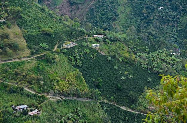 Пейзаж с кофейными фермами. колумбия.