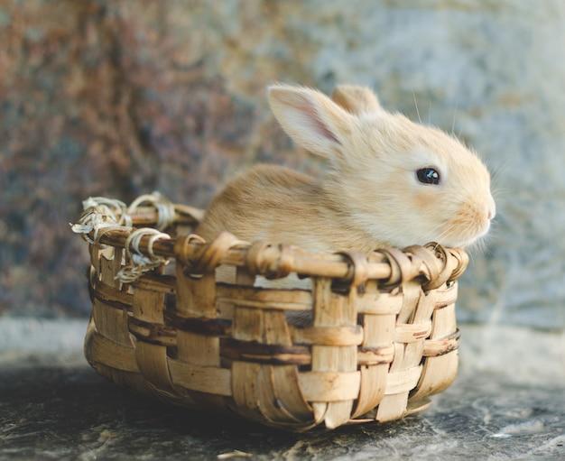 木製バスケットの小さなキャンディー色のウサギ
