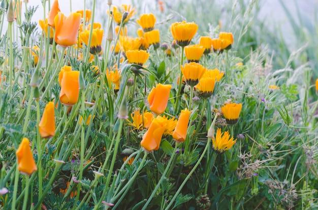 黄色のポピーの花。