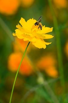 蜂と黄色い花。