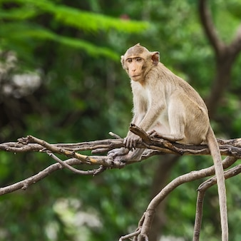 枝に座っている小さなサル