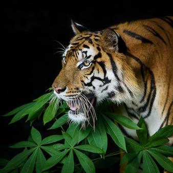 Фото тигра естественно.