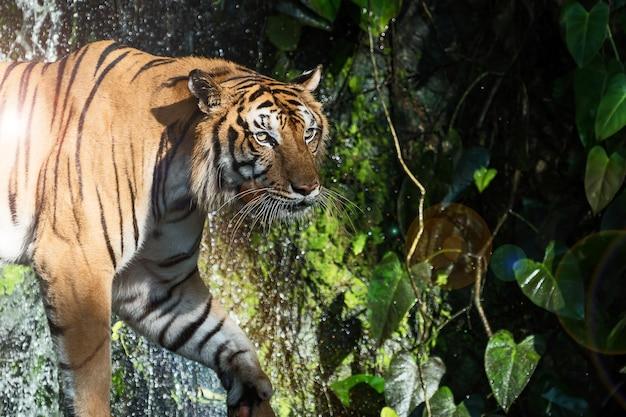 自然に虎の写真。