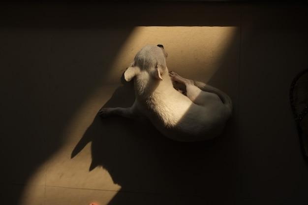 ドアから暖かい太陽の光の正方形のスポットで床に寝ている犬