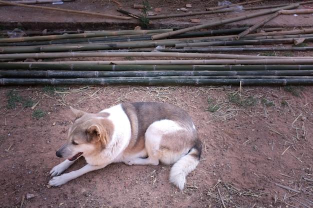一人で犬と小さな石で寝ている