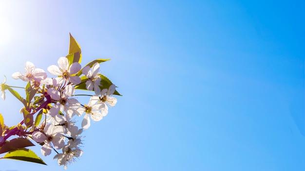 美しい春の白い花の花の背景