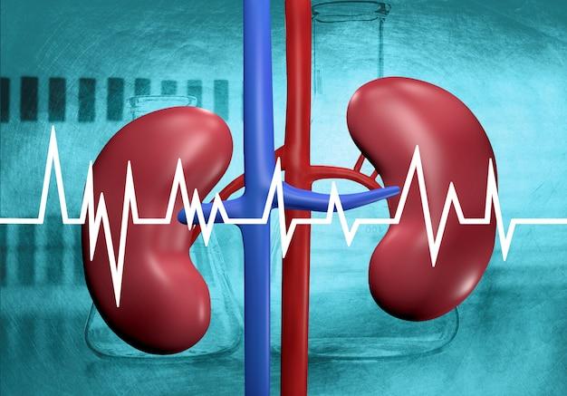 実験室分析における腎臓