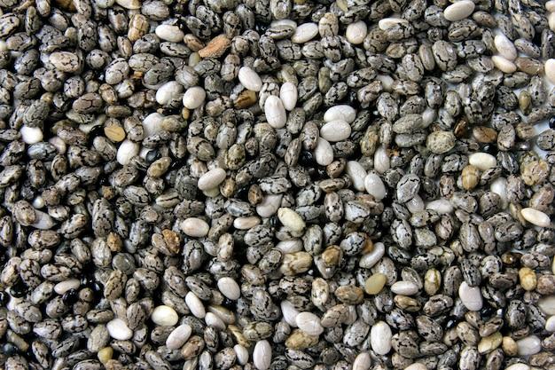 組織の彼らのパターンと背景を形成する孤立したチア種子