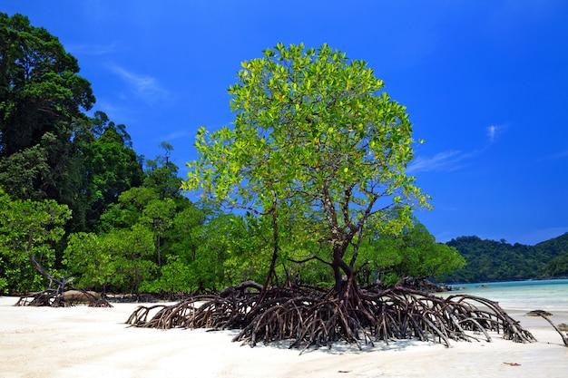 美しいビーチと熱帯の海のマングローブ。