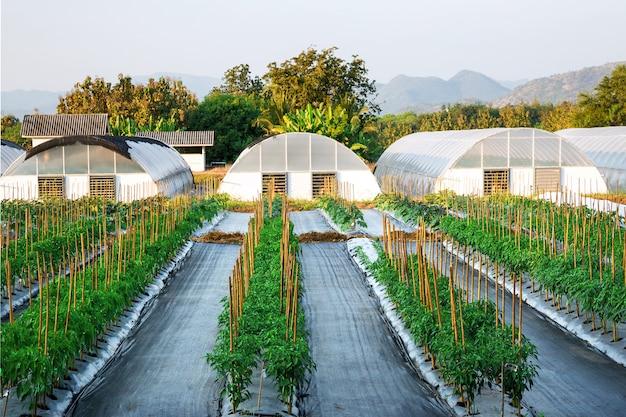 農地の農学自然林と山々。