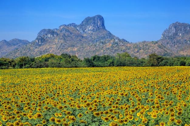 山と美しいひまわり畑